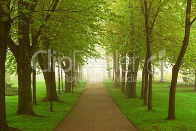Foggy park