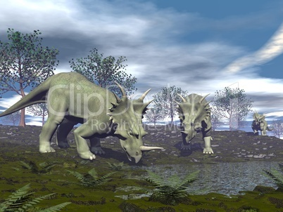 Styracosaurus dinosaurs going to water - 3D render