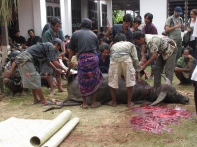 Dzielenie mięsa bawoła wodnego podczas ceremonii pogrzebowej w Tana Toraja