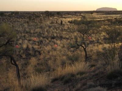Uluru (wschód słóńca)