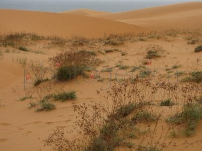 Czerwone wydmy koło Mui Ne