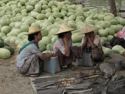 Trzy kucające kobiety ze stertą arbuzów