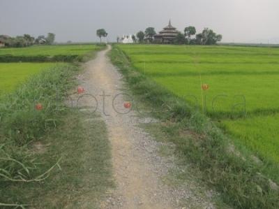 Buddyjski klasztor wśród pól ryżowych