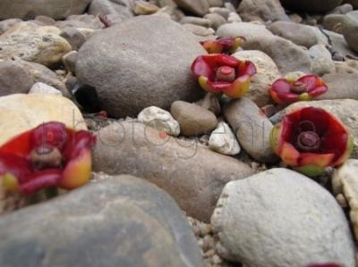Kwiaty wśród kamieni