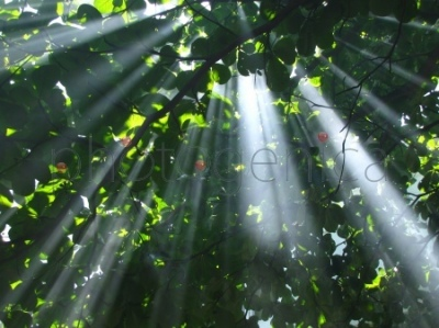 Promienie światła