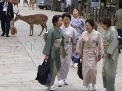 Jelenie i Japonki