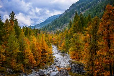 Colorful autumn forest in mountains