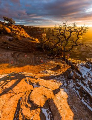 Moab tree growing on rocks, Arches and Canyonlands National Park, Utah, USA