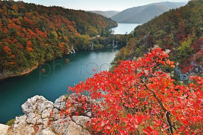 Scenic view of forest and lake in autumn