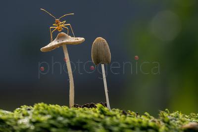 Ant perching on mushroom