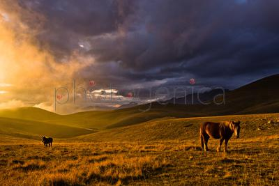 Horses grazing on meadow at sunset