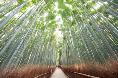 Alley in bamboo grove, Kyoto, Japan
