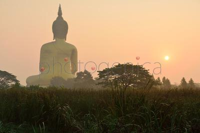 Meadow and rear of Buddha statue